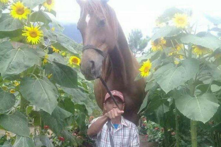 Seorang instruktur di Megastar saat membawa keliling kuda ke kebun bunga matahari
