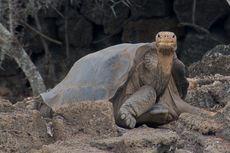 Gen Kura-kura Raksasa Ungkap Rahasia Hidup Panjangnya