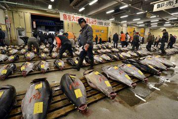 Pelelangan tuna menjelang pagi di Pasar Tsukiji, Tokyo.