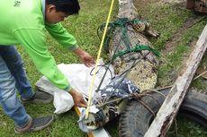Buaya Muara 3,5 Meter yang Berkeliaran di Danau Wisata Riau Ditangkap