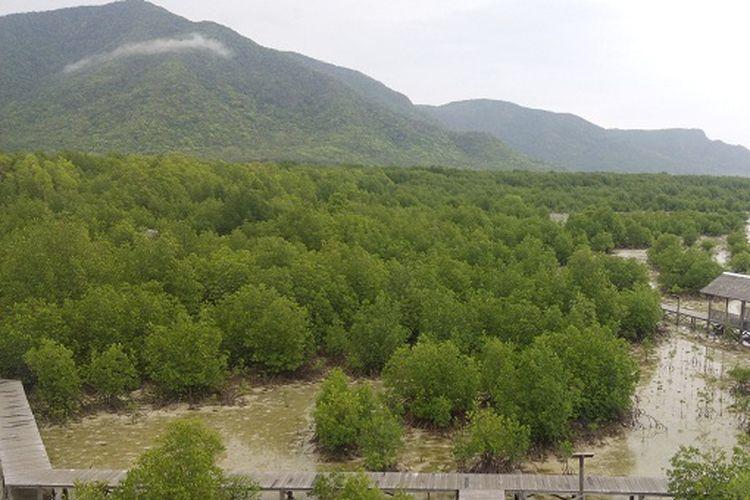Hutan Bakau Karimunjawa