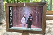 Menyusuri Jejak Drama Winter Sonata di Nami Island