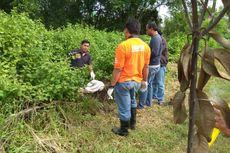 Dibungkus Seprai, Sesosok Mayat Ditemukan Pemulung di Tong Sampah