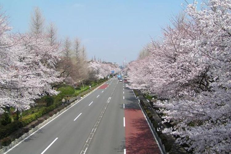 University Street dan Sakura Street