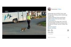 Viral, Video Polisi Lalu Lintas Seberangkan Kucing di Jalan Raya