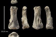 Fosil Jari 90.000 Tahun di Arab Saudi, Bukti Kehebatan Migrasi Manusia