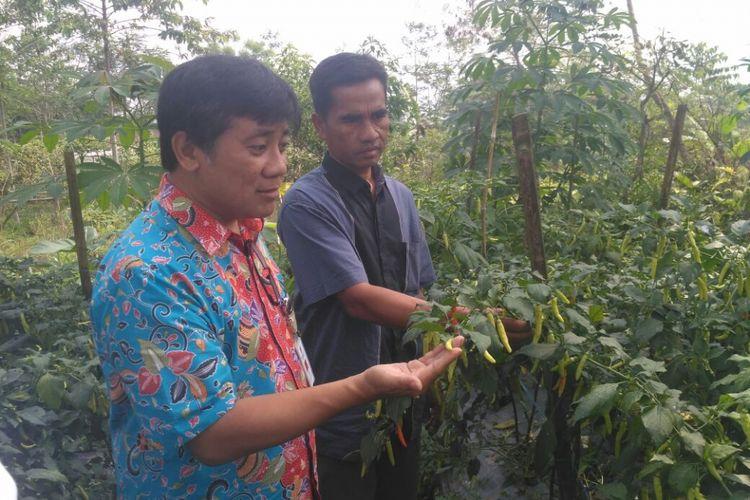 Sukijo (46) petani asal Dusun Banaran, Desa Keningar, Kecamatan Dukun, Kabupaten Magelang, Jawa Tengah, menunjukkan hasil pertaniannya kepada Direktur Lingkungan Hidup Bappenas, Medrilzam