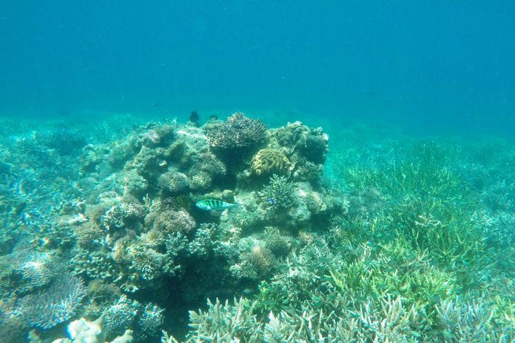 Menyusuri Keindahan Bawah Laut Manjarite di TN Komodo