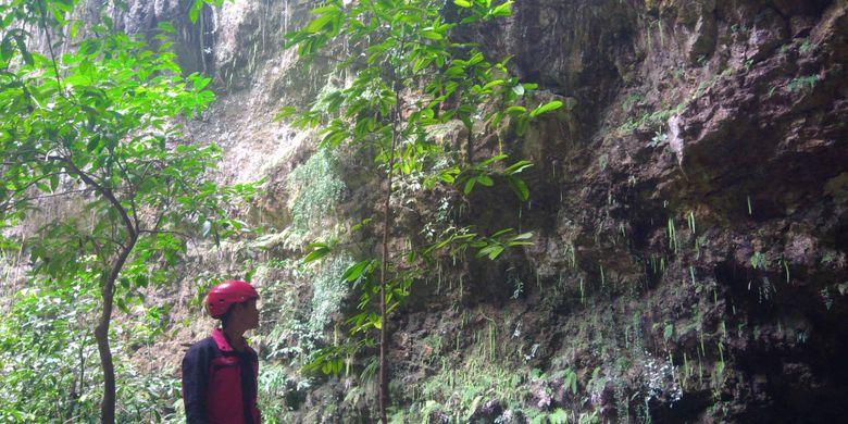 Seorang pemandu menunjukkan pohon yang hanya tumbuh di dasar Goa Jomblang, Gunungkidul, DI Yogyakarta.