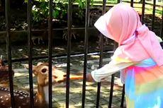 Ramainya Pengunjung Beri Makan Rusa Totol di Istana Bogor pada Hari Libur