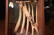 Tulang Tumbuh Selimuti Panah yang Tertancap di Rusuk Rusa, Kok Bisa?