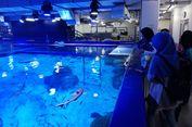 Mengintip 'Dapur' Jakarta Aquarium