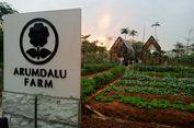 Serunya Panen Sayur hingga Bunga Matahari di Dekat Jakarta