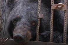 Dikira Anjing, Hewan Peliharaan Keluarga Ini Ternyata Beruang Hitam