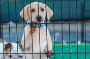 Berisiko Rabies, Warga Vietnam Didesak Kurangi Konsumsi Daging Anjing