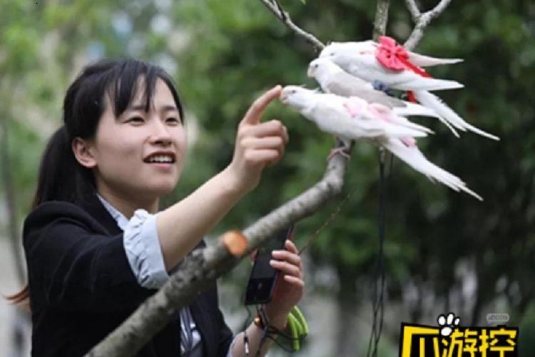 Zheng Han yang meraih pendapatan puluhan juta rupiah dari menjual popok burung.