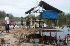 Cagar Alam Panua Dirambah, Pohon Mangrove Ditebangi Dijadikan Tambak
