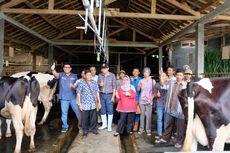 Peternak Sapi Perah Indonesia Bisa Maju seperti Peternak New Zealand