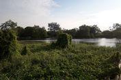Muara Angke Disebut Habitat Buaya, Warga Tak Pernah Lihat Buaya di Sana