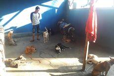 Bisnis Menggiurkan Anjing Kampung Garut, Diminati di Sumbar, Harganya Mencapai Rp 1 Juta Per Ekor