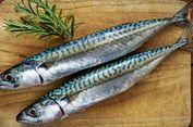 Tak Selalu Bahaya, Ini Catatan FAO tentang Cacing Pada Makarel Kaleng