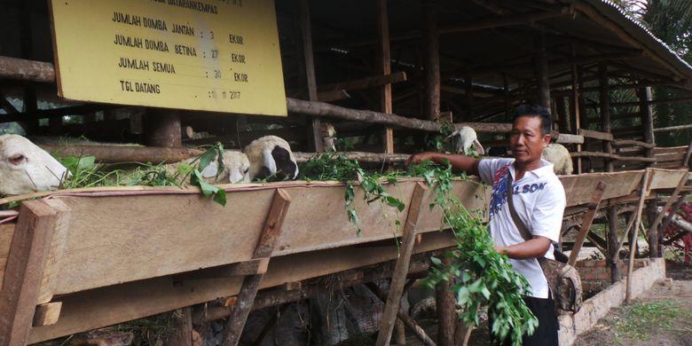 Karya Trans Mandiri yang ditargetkan memproduksi 600 ton pupuk kompos dari limbah sawit dan kotoran 80 dombanya, hasil pengembangbiakan domba bantuan sebanyak 30 ekor dan swadaya.