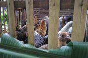Mentan Sasar 14 Ribu Rumah Tangga Miskin di Lumajang