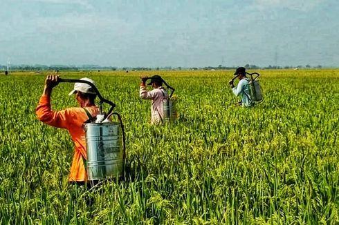 Kementan Atur Perizinan, Peredaran, dan Pemanfaatan Pestisida Terbatas