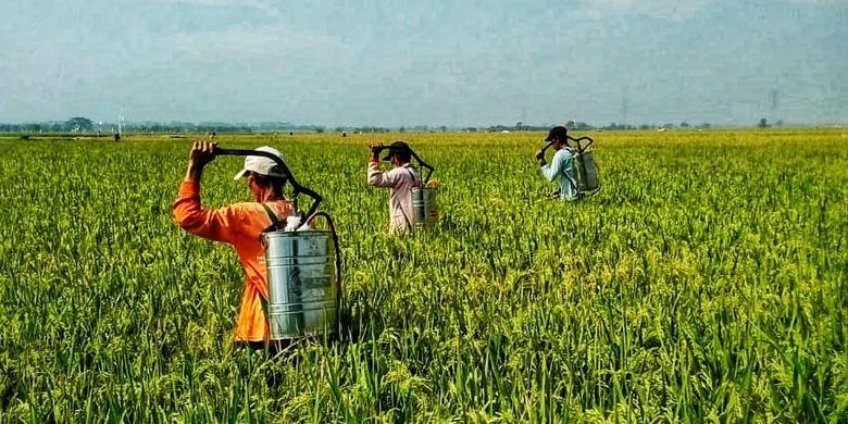 Kendalikan Opt Sejak Dini Adalah Kunci Amankan Produksi Pertanian