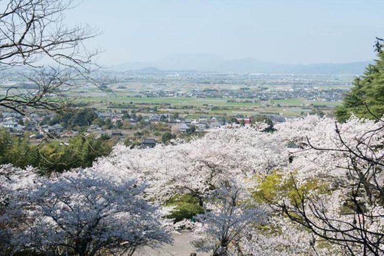 Taman yang berada di dalam gunung di daerah Asano. Deretan lereng yang landai diwarnai dengan sakura.