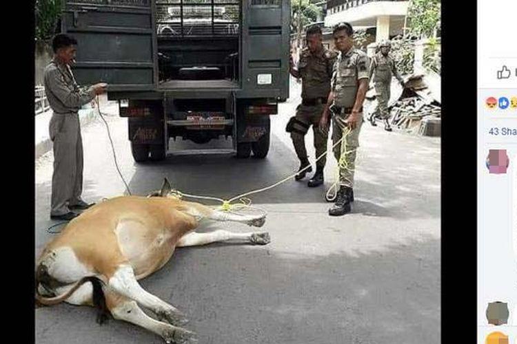 Video seekor sapi yang ditarik mobil Satpol PP hingga terkapar viral di media sosial. Aksi yang terjadi di Kabupaten Bulukumba, Sulawesi Selatan, itu dikecam ribuan warganet.