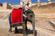 Sekarang India Punya Rumah Sakit Khusus untuk Gajah