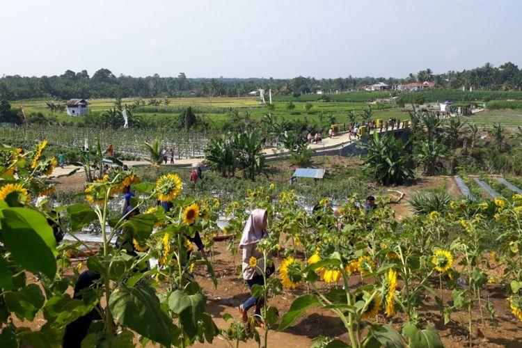 Pemandangan di lokasi taman edukasi pertanian dan wisata