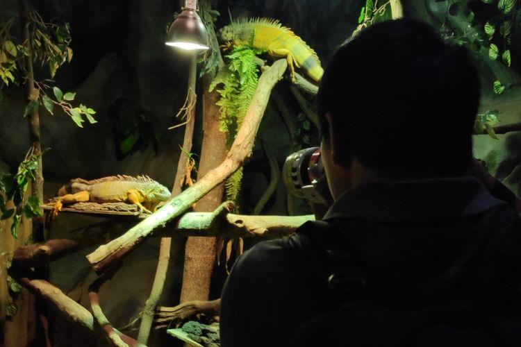 Peserta International Animal Photo Competition memotretbsatwa di Jakarta Aquarium.