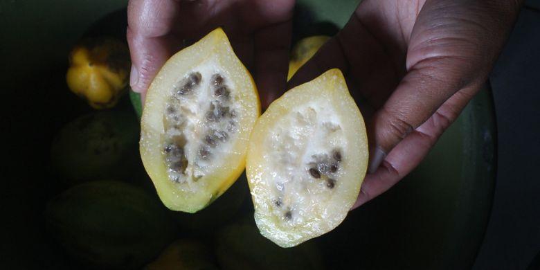 Buah carica atau karikaya yang dijadikan minuman oleh masyarakat Suku Tengger, Jawa Timur, Jumat (8/6/2018).
