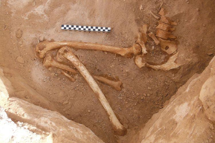 Temuan kerangka wanita hamil di Mesir. Di bagian panggulnya menunjukkan wanita ini berada di trimester pertama saat dia meninggal.