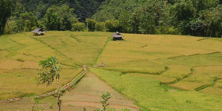 Persawahan Lingko Marang berbentuk jaring laba-laba di kampung Tado, Desa Ranggu, Kecamatan Kuwus Barat, Flores, NTT, Minggu (31/3/2019). Ini salah satu destinasi wisata alam di Lembah Ranggu-Kolang Flores Barat.