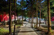 Sensasi Kemah Mewah di Perkemahan Suncheon