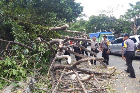 Angin Kencang Terjang Ambon, Pohon Tumbang, Jalan Macet