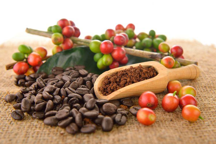 Buah, biji dan bubuk kopi