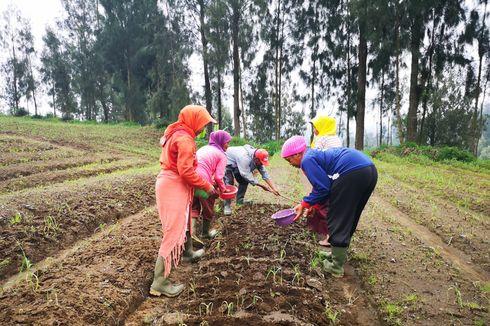 Mentan Optimis Indonesia Bisa Swasembada Bawang Putih