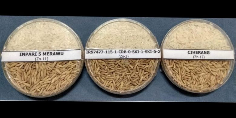 Kementan luncurkan varites bibit padi dengan kandungan Zinc tinggi