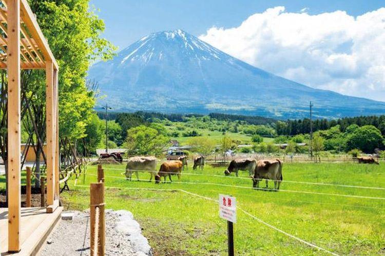 Nikmati hidangan di peternakan sambil melihat Gunung Fuji dan sapi yang berkeliaran di sekitar padang rumput