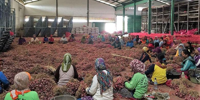 Hasil panen bawang merah petani Brebes