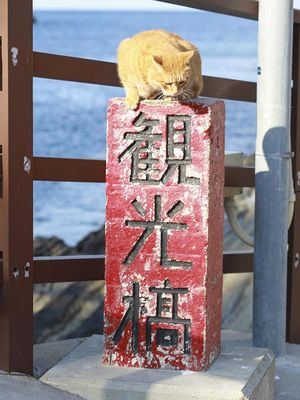 Don-chan duduk di atas markah jembatan berwarna merah.