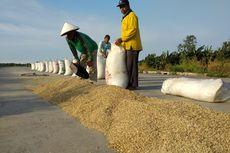 Gandeng Mandiri, Pupuk Indonesia Serap 4.000 Ton Gabah Petani Karawang