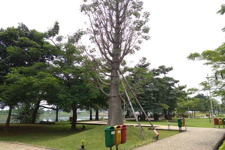 Menengok Pohon Kehidupan Rp 750 Juta di Tengah Bau Tak Sedap Waduk Ria Rio