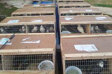 Polisi Gagalkan Penyelundupan 141 Ekor Burung Kakaktua