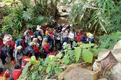 Menapaki Jejak Geologi di Situs Karangsambung, Jawa Tengah