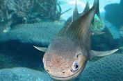 Ahli Sebut Fosil Ikan 400 Juta Tahun Ini Moyang Manusia, Kok Bisa?